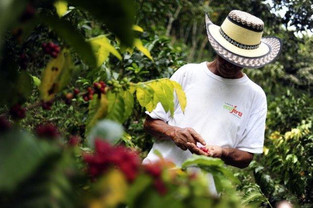 Nikaragua Kahve Orijini