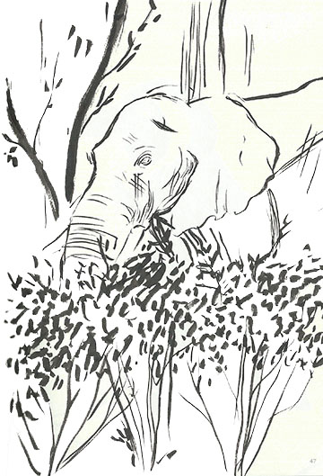 Elephant in the Bushes