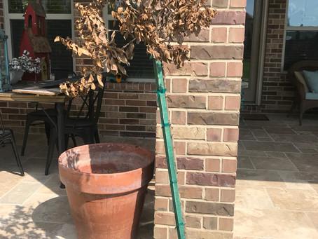 I think I killed my tree, is it really dead?
