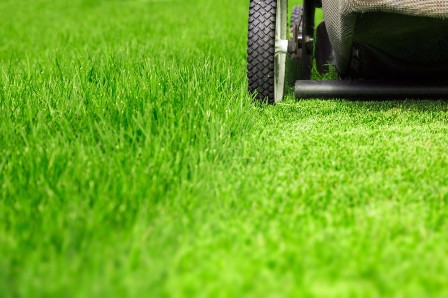 Best Grass for Houston