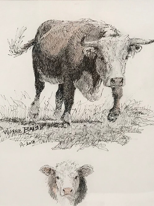 hereford cow drawing