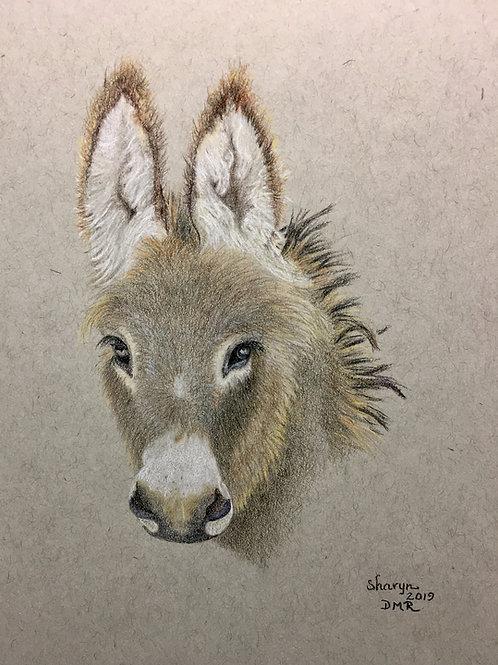 wild burro colored pencil drawing