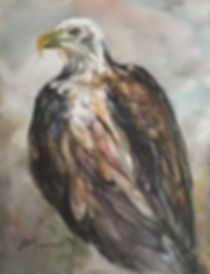 Bald Eagle watercolor painting by Lindy Cook Severns