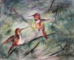 rufous hummingbirds in pine watercolor by Lindy Cook Severns