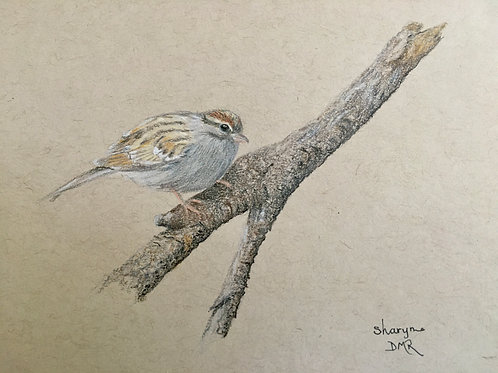 sparrow on branch drawing