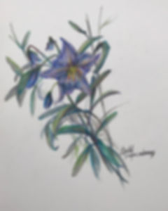 lilac wildflower stalks colored pencil drawing by Lindy Cook Severns art