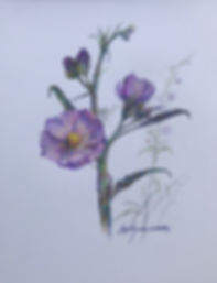 stalk of pink wildflowers colored pencil drawing lindy cook severns art