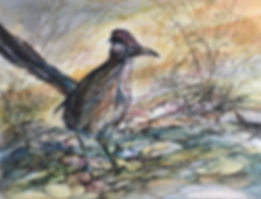 Roadrunner on rocks watercolor by Lindy Cook Severns