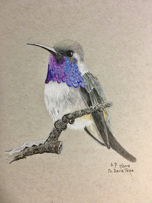 hummingbird on crooked branch drawing