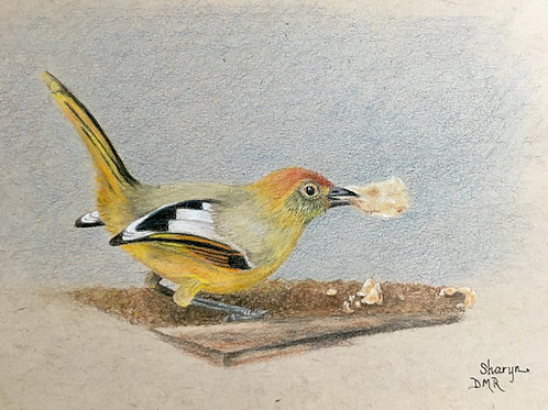 yellow bird with cornflakes drawing