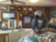 Lindy's studio buddy is an African Grey parrot who loves art.