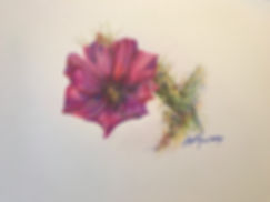 Fuschia cactus flower in this original colored pencil drawing by Texas painter Lindy Cook Severns