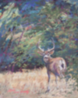 mule deer buck in a pine forest of autumn color pastel painting Lindy Cook Severns art