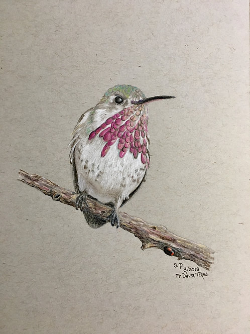 hummingbird and ladybug on branch colored pencil drawing