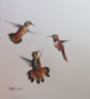 Hummingbirds in flight, colored pencil drawing by Lindy Cook Severns art