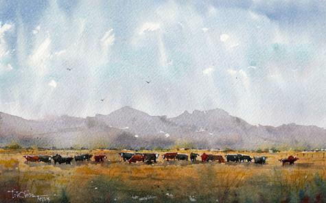 Fat Cows on Rancho Espuela Grass 2