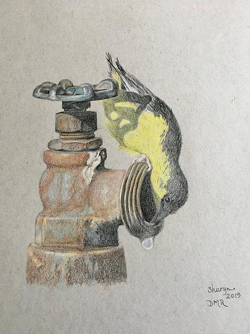 yellow bird upside down at water faucet drawing