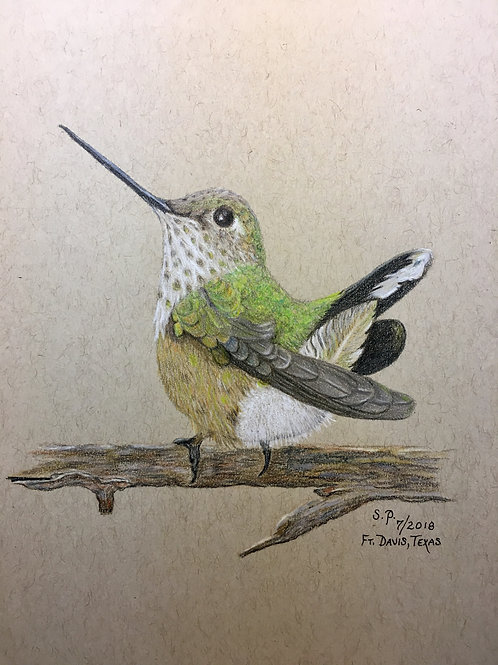green hummingbird on branch drawing