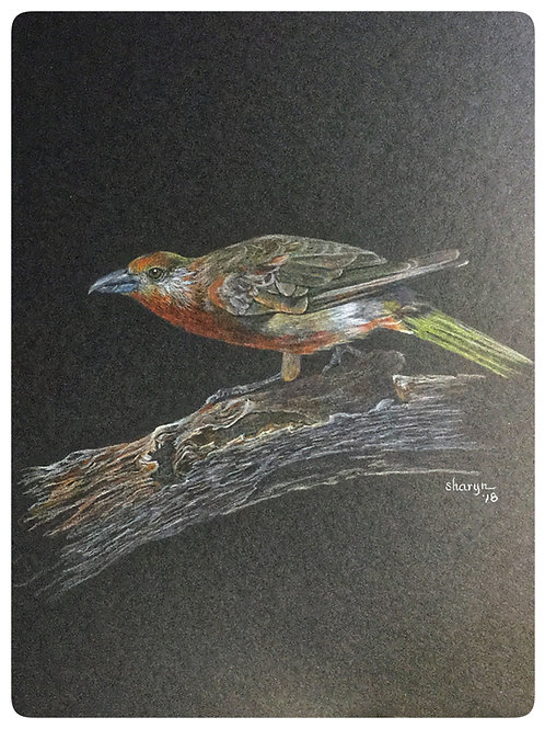 bird on branch drawing on dark paper