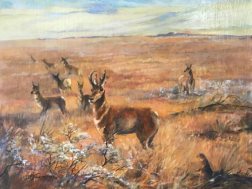 pronghorn antelope in golden grass oil painting by Lindy Cook Severns