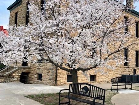 April: Osage County