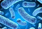 A new antibiotic has been discovered with no detectable resistance