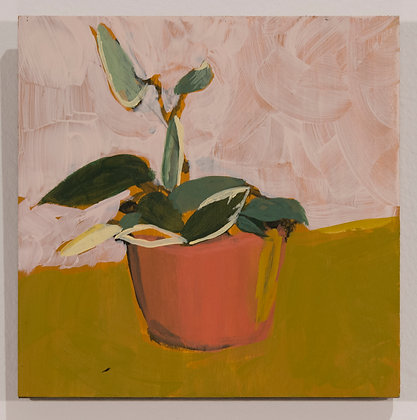 22. Little hoya, Sara Cuthbert