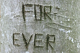 beech tree grafitti