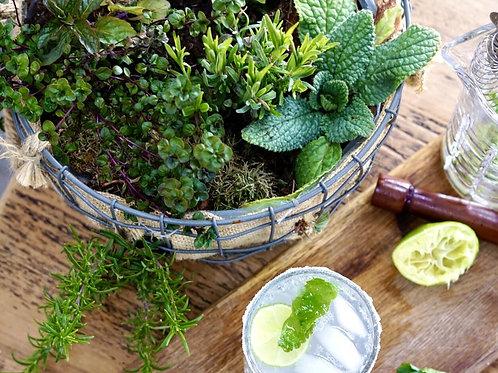 Herb garden hanging basket