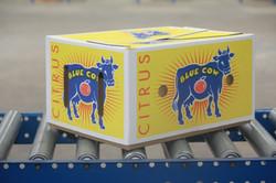 1 Blue Cow Box