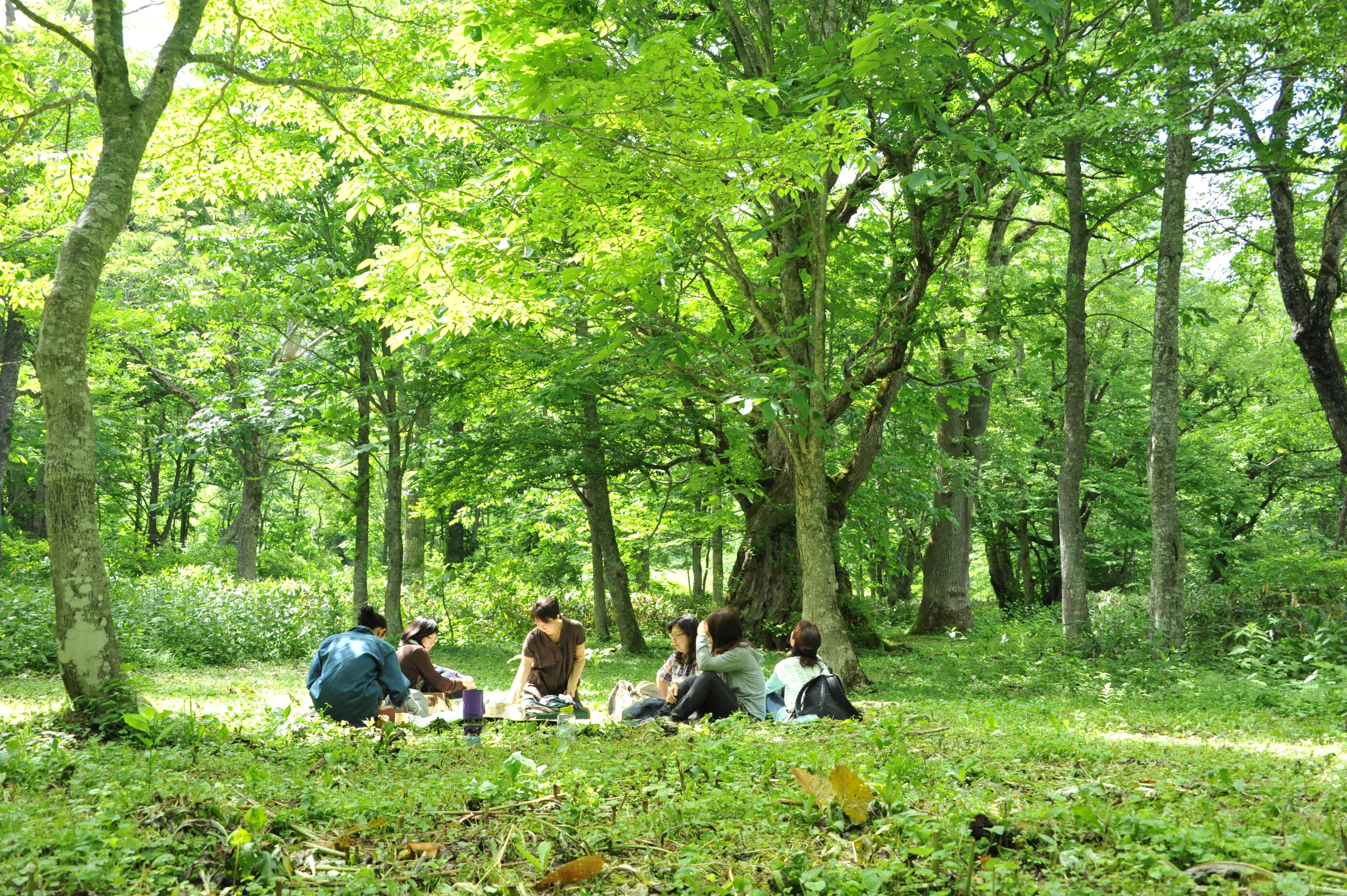 夢見の森でランチ(夢見平)