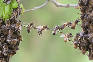 bee-teamwork.jpg