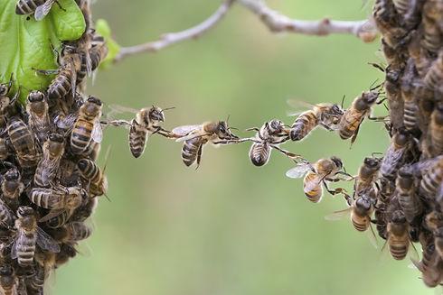 bee-teamwork.jpg