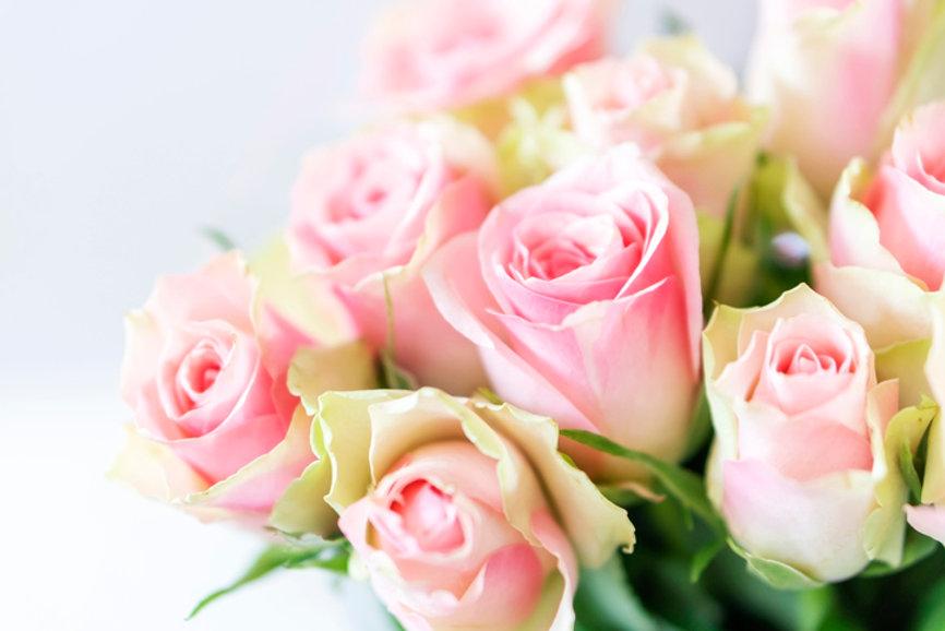 bellafiore.jpg