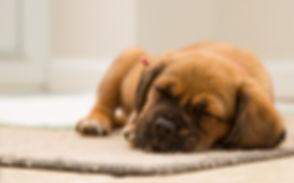 animal-cute-dog-97863.jpg