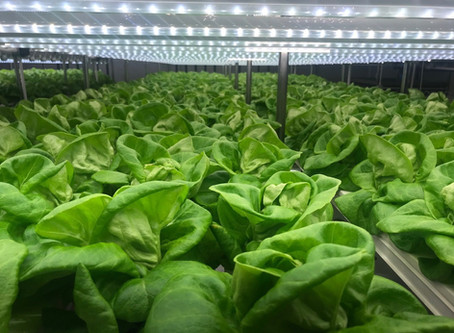 What is Controlled Environment Agriculture (CEA)?