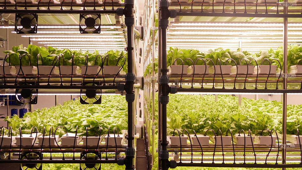 Vertical-Farming-Beds-Technology.jpg