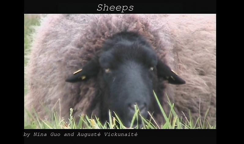sheeps2.png