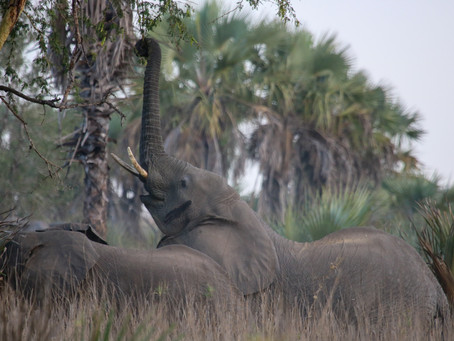 Where to see Elephants in Africa?