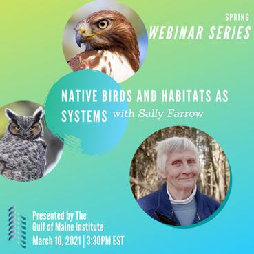 Native Birds with Sally Farrow at Mass Audubon