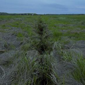 Marsh Restoration as Climate Change Adaptation