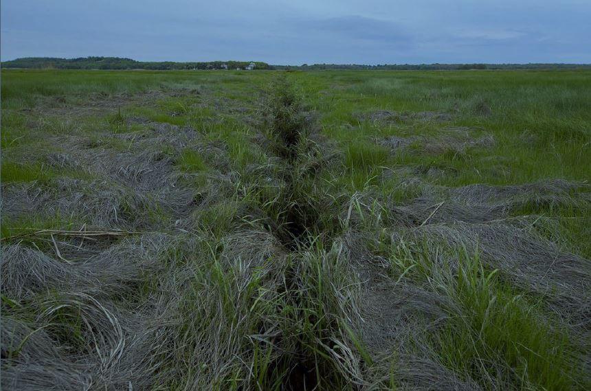 An example ditch. Photo Credits: Jesse Costa/WBUR