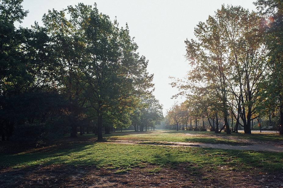 pf-d35b5053--misty-morning-trees.jpg