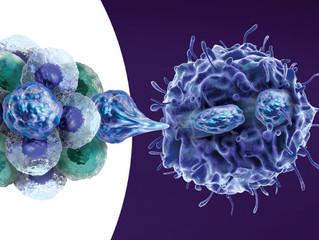 Direcionar o metabolismo pode derrotar as células-tronco do câncer