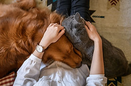 Empire Pet Care Dog and Cat happy cuddling on person's lap