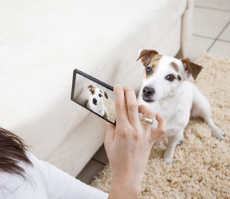 9 Ways to Get Better Photos of Your Pets