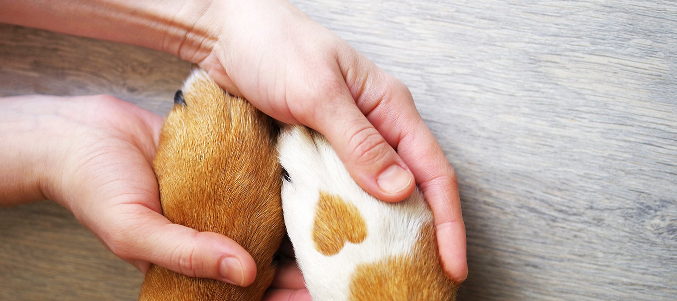 Empire Pet Care human hands holding dog paws with heart on paw
