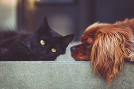 Empire Pet Care About Us Dog and Cat