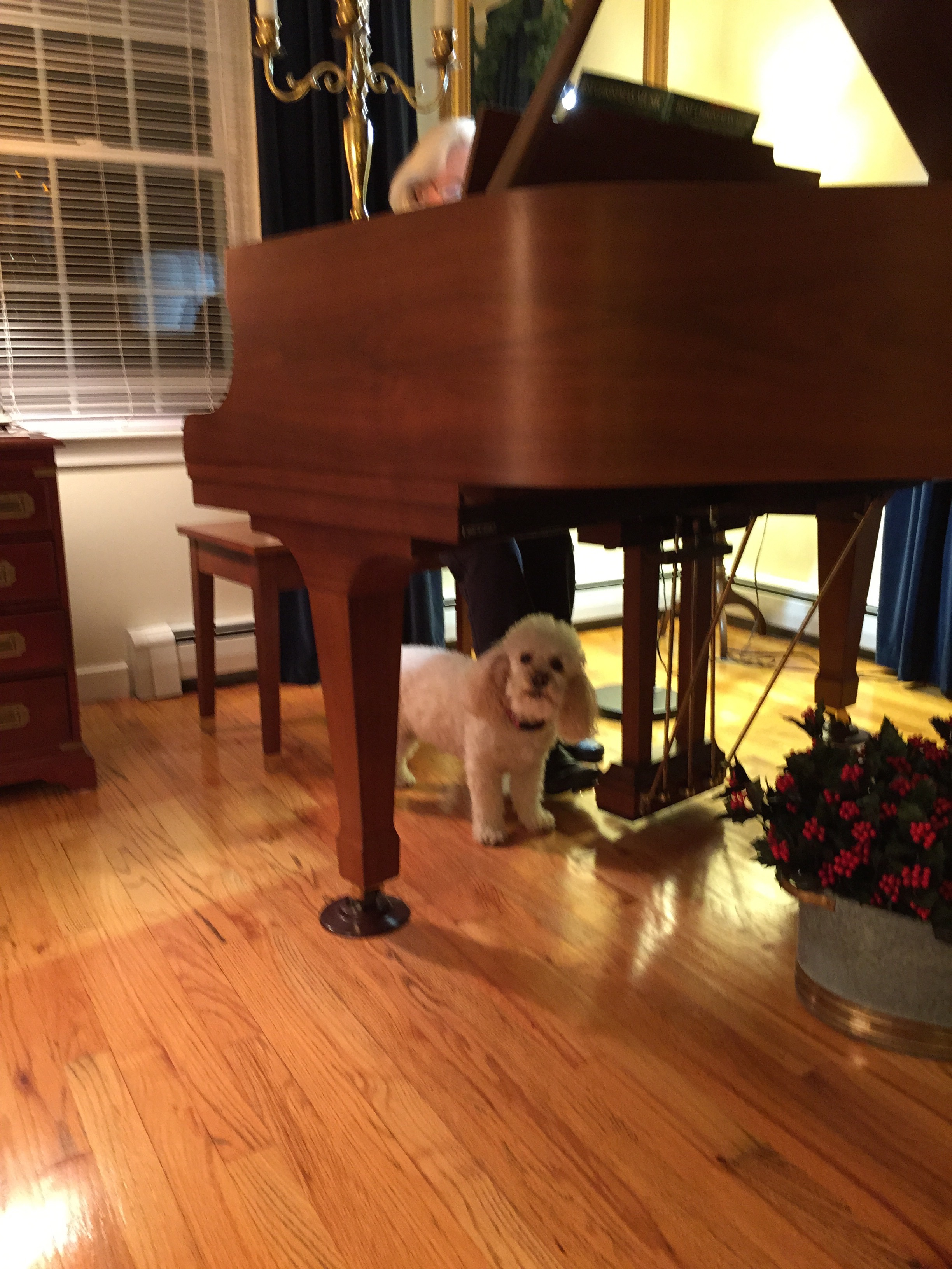 Holidays 2014 Piano Party Plymouth