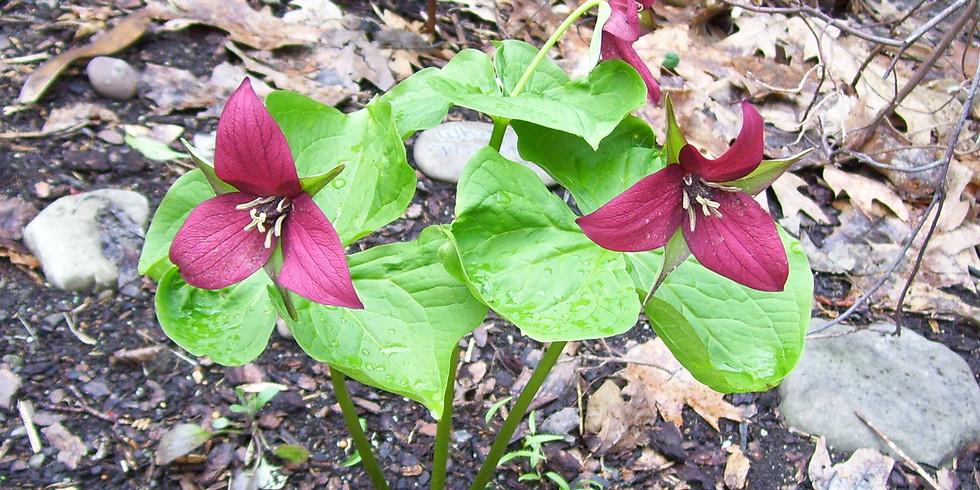 Spring Wildflower Celebration - Sunday, May 9